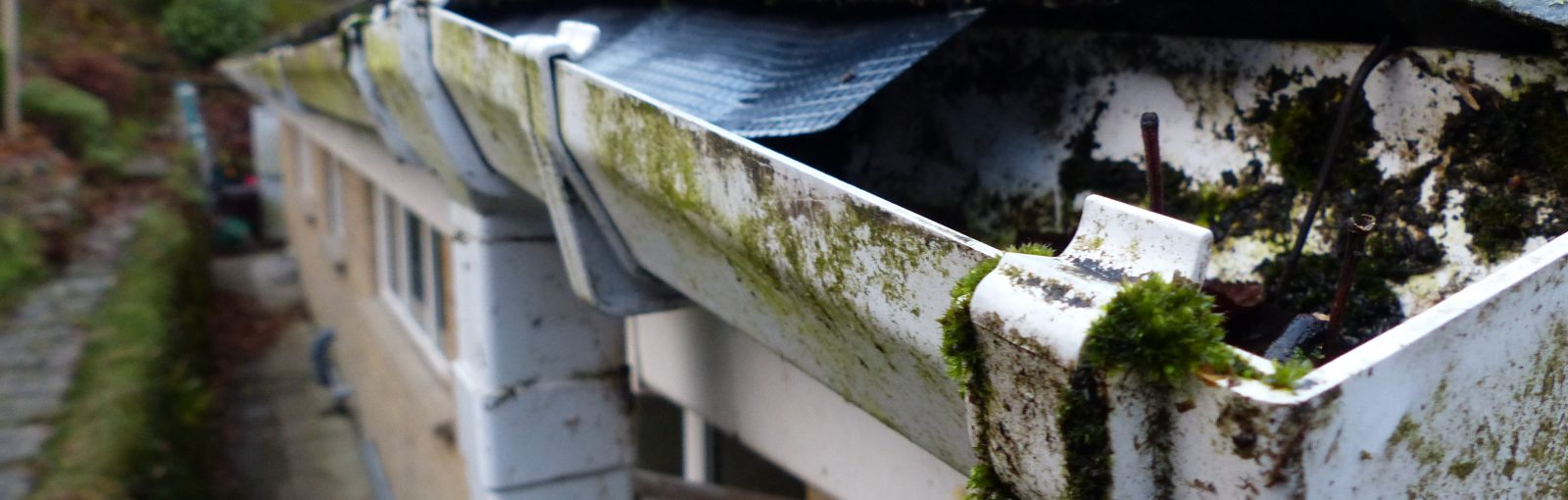 Roof cleaning services in New Jersey and New York.