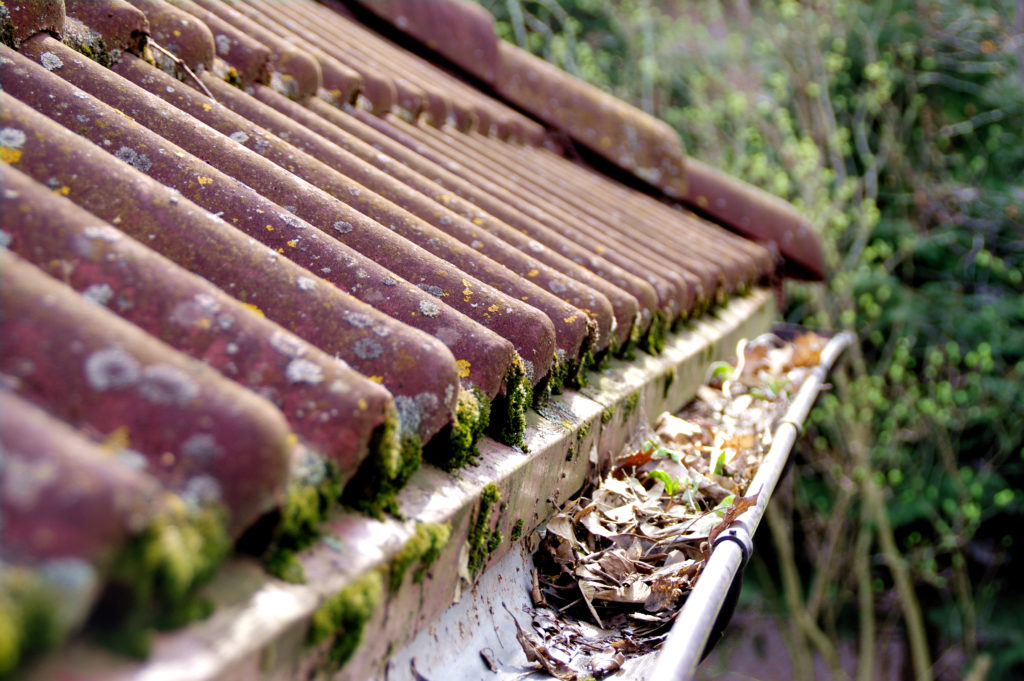 Mold and rot on the roof can mean that it's time to invest in a new roof.